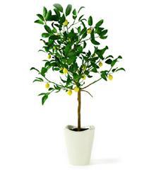 梨树盆栽模型
