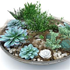 多肉植物小盆栽 succulent composition plants