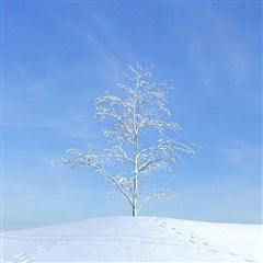 Evermotion Archmode 秋冬树木 冬天的树木