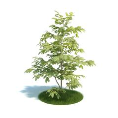 Evermotion Archmode 植物 合欢