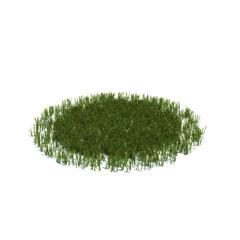 Evermotion Archmode 草地植物 简单的大草