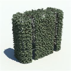 Evermotion Archmode 草地 植物 树篱