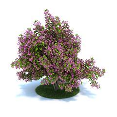 Evermotion Archmode 园艺植物 锦带花