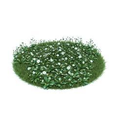 Evermotion Archmode 园艺植物 雏菊