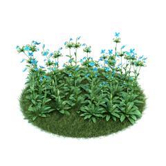 Evermotion Archmode 园艺植物 藿香叶绿绒蒿