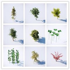 高山花卉模型合集