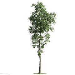 各类树木 树 式样2