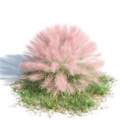 绿色植物套系 花草树木 粉黛乱子草 Muhlenbergia capillaris