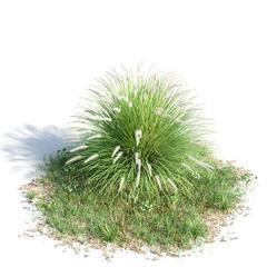 绿色植物套系 花草树木 狼尾草