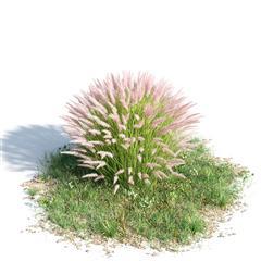 绿色植物套系 花草树木 绒毛狼尾草