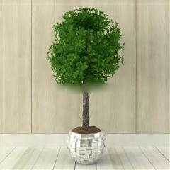 盆栽植物装饰品
