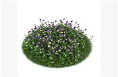 灌木矮生植物48