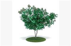 灌木矮生植物25