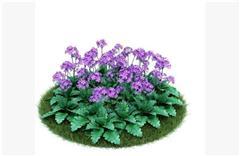 灌木矮生植物43