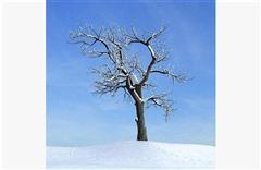 秋冬树木030
