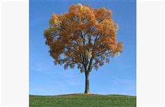 秋冬树木098