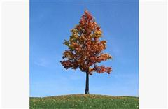 秋冬树木081