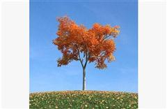 秋冬树木 式样7