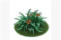 灌木矮生植物14
