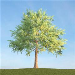 室外低面数树木