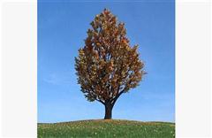 秋冬树木093