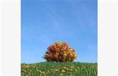 秋冬树木 式样5