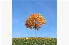 秋冬树木063