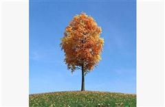 秋冬树木083