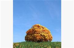 秋冬树木056
