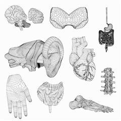 人体器官模型 182器官合集