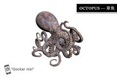 章鱼 octopus