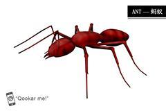 红蚁 ant red