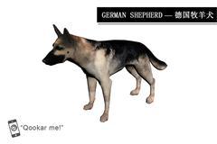 德国牧羊犬 German shepherd