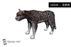 美洲虎 jaguar