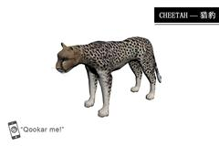 猎豹 cheetah