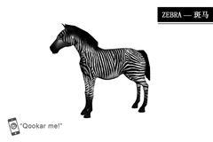 斑马 zebra