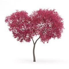 针叶树 15