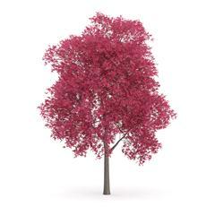 针叶树 17