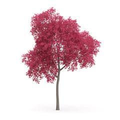 针叶树 18