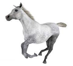马 Horse 奔跑