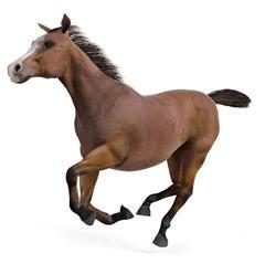 马 Horse 奔跑黄鬃马